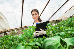 Order to Increase Strictness on Administration and Inspection of Phytosanitary Certification for Plants and Plant Products to the European Union